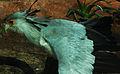 Secretary Bird (4232084722).jpg