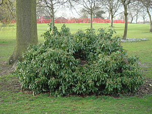 Selly Oak Park - Image: Selly Oak Stump