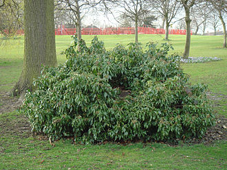 Selly Oak Park - Image: Selly Oak Stump