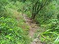 Sentier cascade blanche - panoramio.jpg