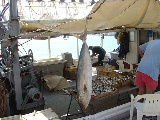 Seriola dumerili catch on a fishing boat deck.jpg