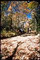 Shenandoah National Park SHEN3859.jpg