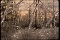 Shenandoah National Park SHEN9147.jpg