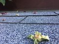 Shingle roof 2 2017-06-14.jpg