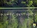 Shore Birds - Midwest Region (8758369444).jpg