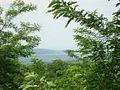 Silistea Tataru - panoramio (15).jpg