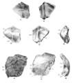 Sinanthropus Skulls VIII and IX.png
