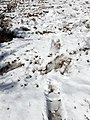 Snow in Kakani 20190228 111807.jpg