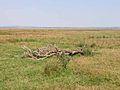 Solway marshes at Carndurnock - geograph.org.uk - 206479.jpg