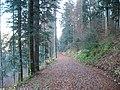 Sommerlicher Herbst Herrenstuhl - panoramio (10).jpg