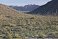 Sonoran Desert NM (9406686984).jpg