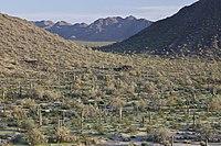Sonoran Desert NM (9406686984) .jpg
