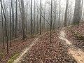 South Campus trails Oxford MS 1.jpg