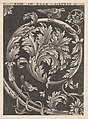 Speculum Romanae Magnificentiae- Ornamental foliage from churches MET DP870056.jpg