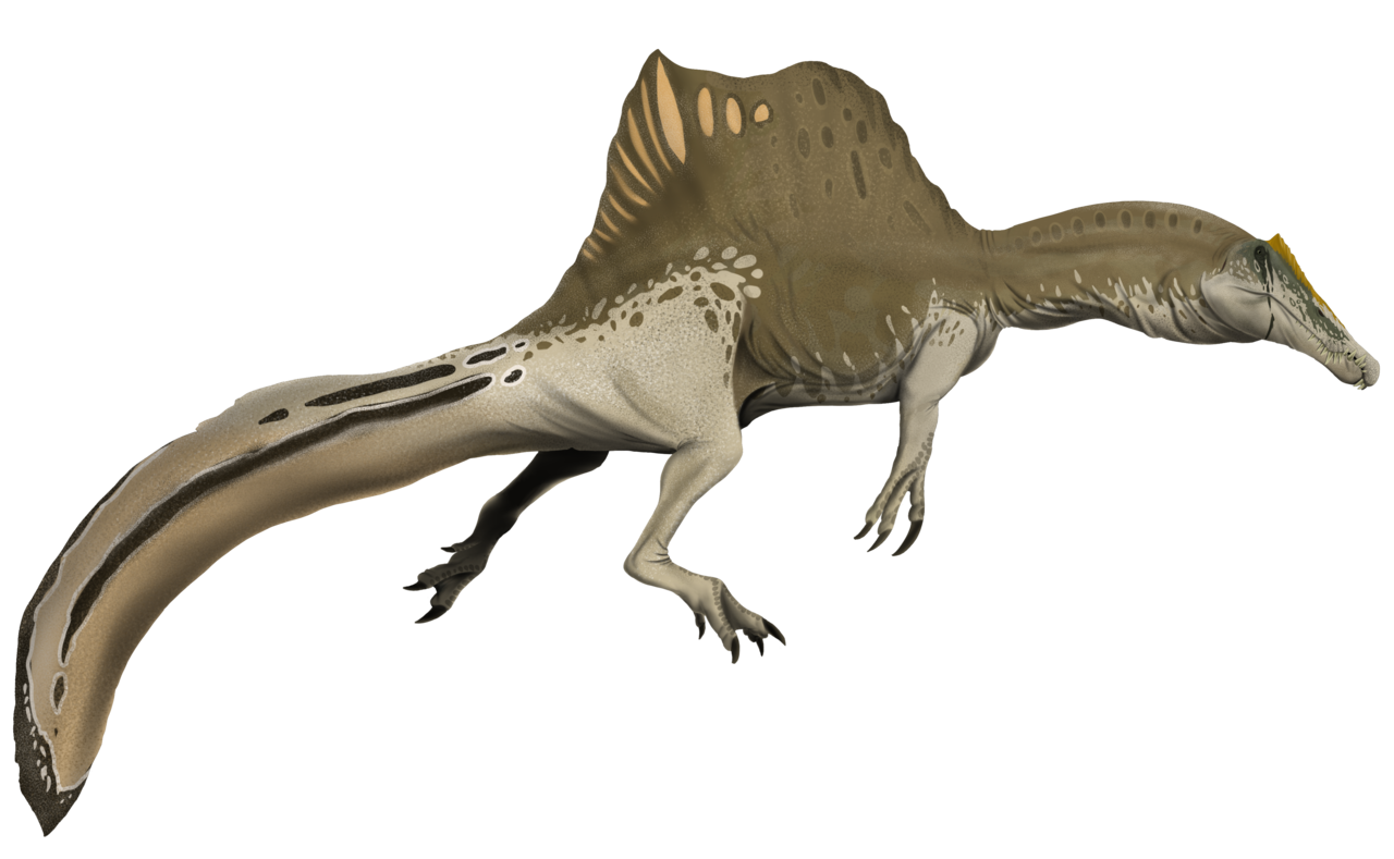 Accurate spino, What Famous Dinosaurs Really Looked Like
