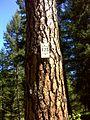 Spokane, WA, USA - panoramio (7).jpg