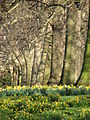 Spring in St. James Park - London (2329855740).jpg