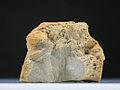 StadtmuseumBerlin GeologischeSammlung SM-2012-2843.jpg