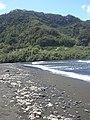Starr-030807-0166-Aleurites moluccana-habit-Honomanu Hana Hwy-Maui (24010548694).jpg