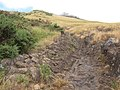 Starr-110705-6694-Ulex europaeus-habit edge of plastering lava flow-Waiale Gulch-Maui (25098191845).jpg