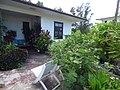 Starr-170614-0986-Solanum torvum-in landscaping-Residences Sand Island-Midway Atoll (36218899061).jpg