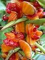 Starr 040220-0322 Hedychium gardnerianum.jpg