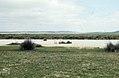 Stilts and gulls. Barbette. Spain (23903740618).jpg