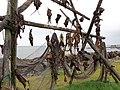 Stockfisch im Wind.jpg