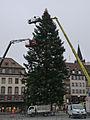 Strasbourg-Installation du sapin de Noël sur la place Kléber (2).jpg