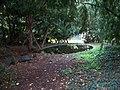 Stromovka, jezírko u Místodržitelského letohrádku.jpg