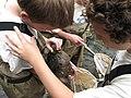 Students find stream animals on rock (6207749864).jpg