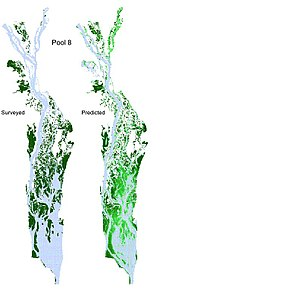 GIS and aquatic science - Surveyed (left) and predicted (right) distributions of submersed aquatic vegetation distribution Upper Mississippi River in 1989. The survey data were from the land cover/land use geographic information created by the U.S. Geological Survey Upper Midwest Environmental Sciences Center on the basis of interpretation of aerial photography of 1989.