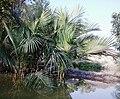 Sundarban (55).jpg