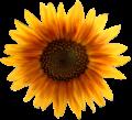 Sunflower Metalhead64 edited.png