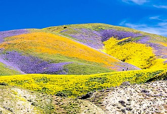 "Carrizo Plain - ""Superbloom"" in the Temblor Range, April 2017"