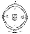 Syringa vulgaris flowerdiagram.png