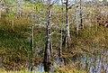 TREES (8479018450).jpg