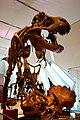 T Rex (4252134993).jpg
