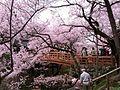Takato Joushi Park1.jpg