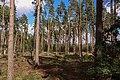 Tallskog ,Småland 02.jpg