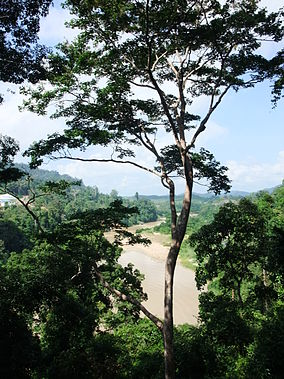 View of sungai tembeling from atop the canopy walkway