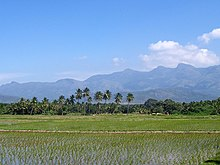 A flooded rice field in Tamil Nadu. Rice paddies are a favoured winter feeding ground for ruff