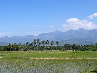 Theni district - Paddy fields across the backdrop of the Western Ghats