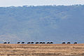 Tanzania-D80-278cnx.jpg