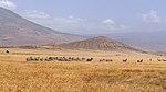 Tanzania Wildlife (9451272223).jpg