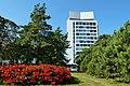 Tapiolan ruusut Espoo 290819 c.jpg