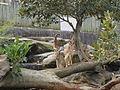 Taronga Zoo (6182478664).jpg