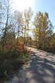 Tay Trail.jpg