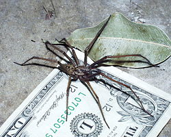 The Wolf Spider How Dangerous Is Its Bite