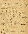 The Canadian field-naturalist (1945-1946) (20494284876).jpg